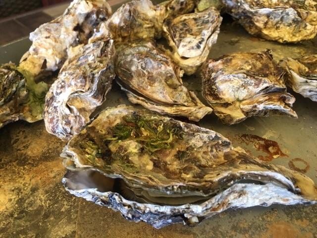 今季の牡蠣食べ放題、最終日のお知らせ